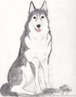 Kylie The Husky by BamaBelle2012