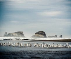 Where the birds like to hang out at Sea Lion Rocks by ahley