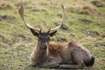 Deer Stock 28 by Malleni-Stock