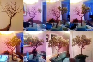 This Is How To Build a Tree by lauraneato