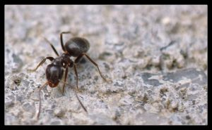 Ant by thr33face