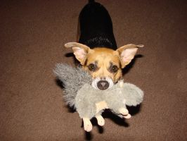 Tippi with Squeaky Squirrel by wolfepaw