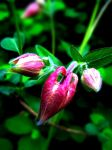 Small... something O.o by MsMacabra