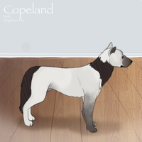 L.O.P's Copeland by Land-O-Peaks-Kennels
