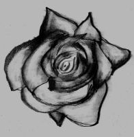 rose drawing by baran700