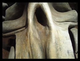 In the Face of a Fossil by Kaiine