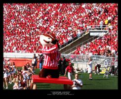 Touchdown Badgers by surrexi