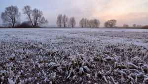 Frosty by alban-expressed