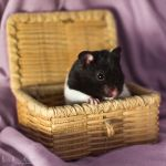 Spotty in a Box by Sarah-BK