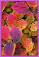 Fothergilla in Fall by GlassHouse-1