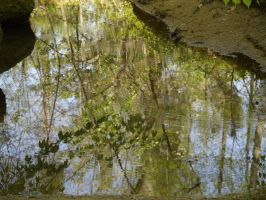 Reflected spring by Irie-Stock