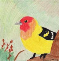 Western Tanager by Roki-Ziro