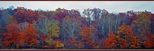 Tree line panoramic.img952, with story by harrietsfriend