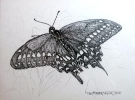 Papillon - SOLD by Orchid-Black