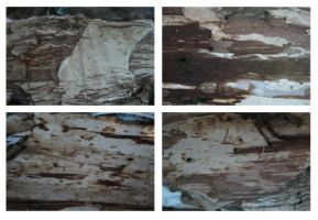 Paperbark Textures by SunOwl