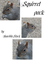 Squirrel pack 1 by YsaeddaStock