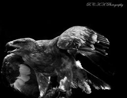 Eagle S_W by PiTurianer