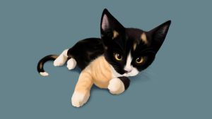 Tia when she was a kitten by axolotldesign