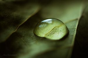 crying leaf IX by JoannaRzeznikowska