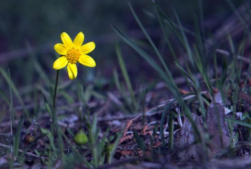 Tiny Yellow Flower by CrimGenProds