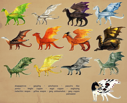 Temeraire Breeds [incomplete] by persian-pirate