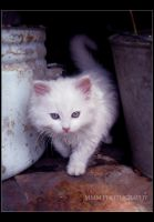White Kitty by Mistress-MMM