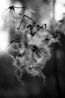 A dream in black and white by shelovessnow