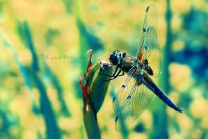 Dragonfly II by Karisca