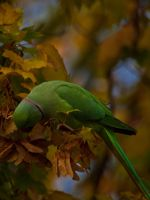 Parrot - Oct 10 by mszafran