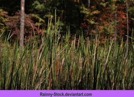 fall cat-tails-STOCK by Rainny-Stock