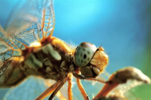 macro dragonfly face by stranger26