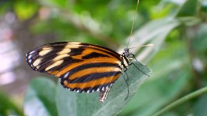 Butterfly III by PamplemousseCeil