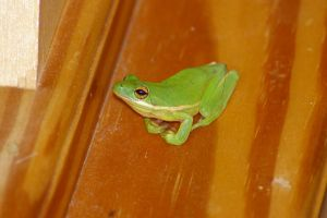 Froggy 1 by skipsstock