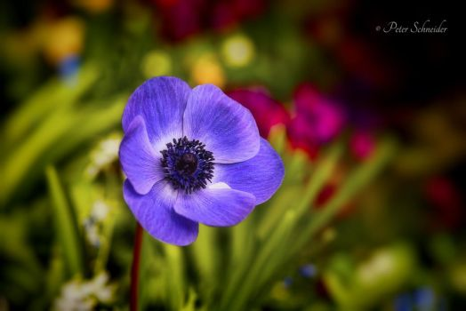 Spring colours(V). by Phototubby