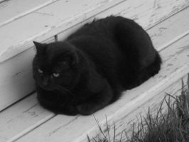 Black Cat on Porch by Leafeon08
