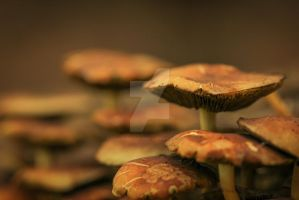 pancakes on a stem... by clochartist-photo