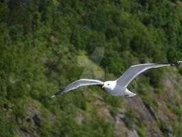 Gull by DC4894