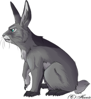 Leo the rabit by hecatehell