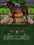 Kasimir Misterioso Reference by Thoroughbreds4Me