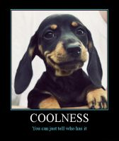 Coolness DP by LatinNewYorker