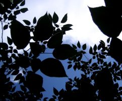 Leaves by DrowningSignificance