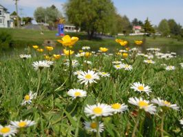 Daisies, Buttercups and Blue Men by I-Artemis-I