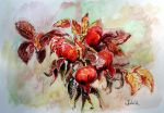 rosehips by danuta50