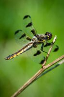 Dragonfly by jvrichardson