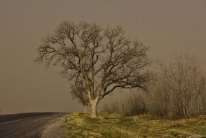 Tree and Sand Storm by Sherjaxon
