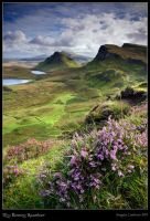 Scotland: My Bonnie Heather by ArwensGrace