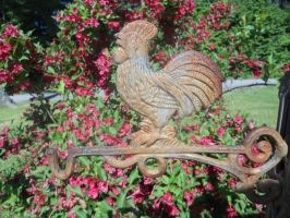 Rusty Rooster by Saphira001