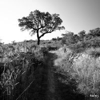 The way by rdalpes