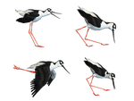 Wading Bird 03 PNG Stock by Jumpfer-Stock