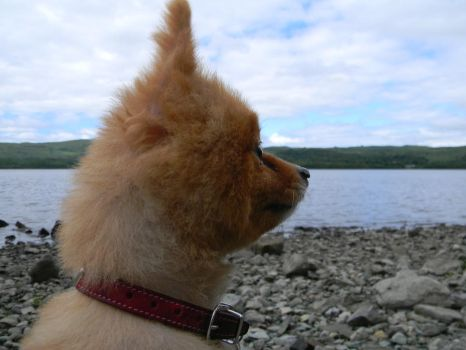 toto at the loch by hollytabatha